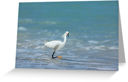Testing the water by kathy s gillentine