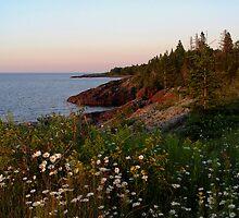 Shore Flora by Karen Karl