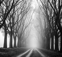 Foggy Road in the forest by giof