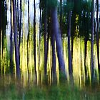 Watercolor forest by Angela King-Jones