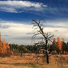 """  Tamarack  Lowlands  "" by fortner"