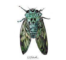 Cicada (Turquoise)  by hjrmackereth
