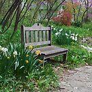 Springtime Bench by mltrue