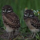we are sleepy by kathy s gillentine
