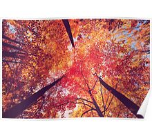 Forest in Autumn Poster