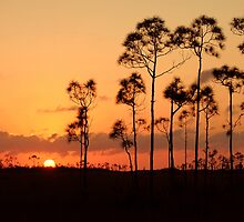 Everglades National Park Sunset by ggpalms