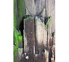Decaying Telephone Post Photographic Print