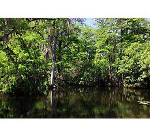 Big Cypress Swamp Photographic Print
