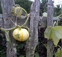 Pumpkin Patch by Bramble