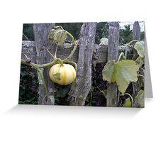 Pumpkin Patch Greeting Card