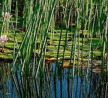 reeds and water lilies by tego53