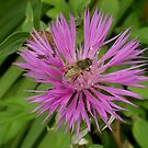Busy Bee by Bramble