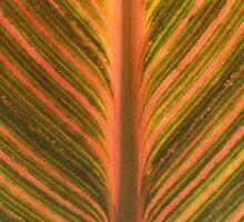 Canna Leaf by Bramble