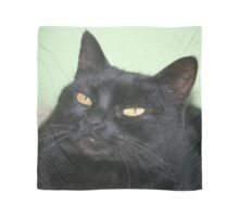 Relaxed Black Cat Portrait Scarf