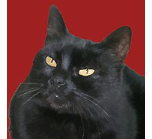 Relaxed Black Cat Portrait Vector Isolated Photographic Print