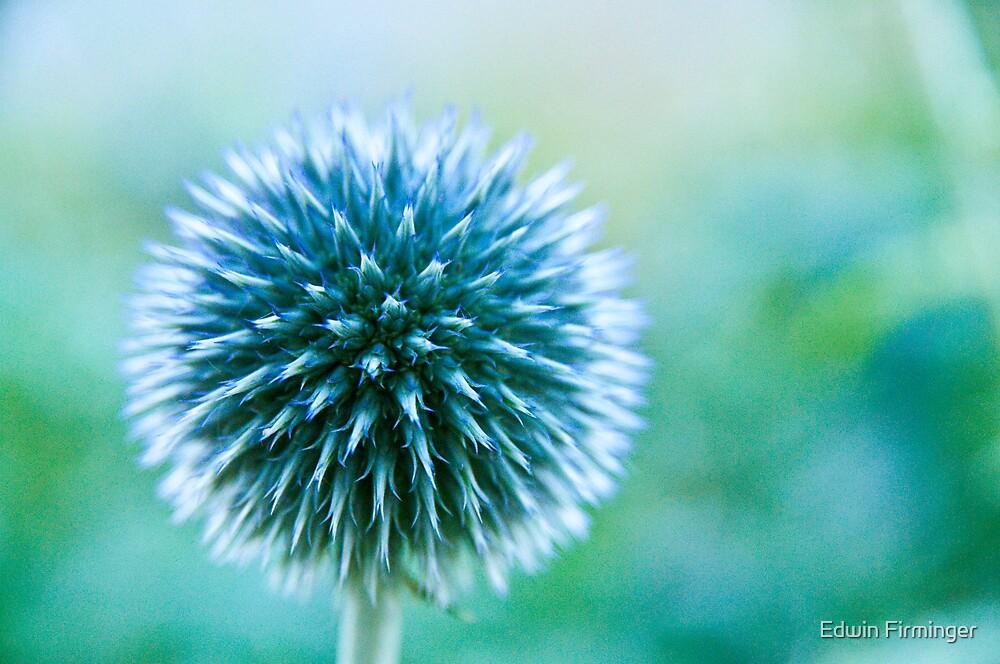 Spike Blue by Edwin Firminger