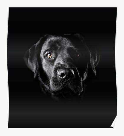 Black Lab Face  Poster