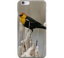 Yellow Headed Blackbird iPhone Case/Skin