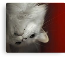 Upside Down Kitty Canvas Print