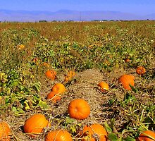 The Most Sincere Pumpkin Patch by debbiedoda