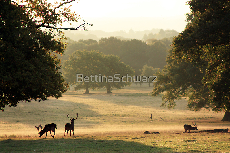 At the Deer Sanctuary by BettinaSchwarz