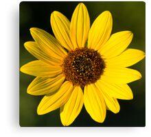 Little Miss Sunflower Canvas Print