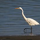 Egret by Tina Dial