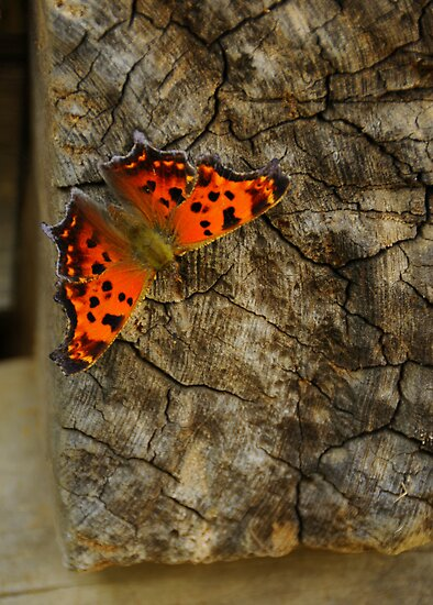 Resting on Wood by JKKimball