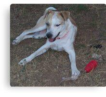 jerzy's dogzilla Canvas Print
