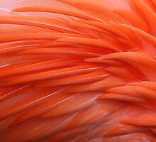 Flamingo by Anne McKinnell