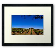 Barossa Vineyard - South Australia Framed Print
