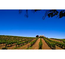 Barossa Vineyard - South Australia Photographic Print