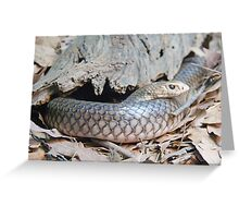 Australian Copperhead Snake, Queensland, Australia  Greeting Card
