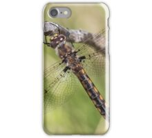 Common Baskettail iPhone Case/Skin