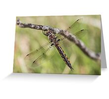 Common Baskettail Greeting Card