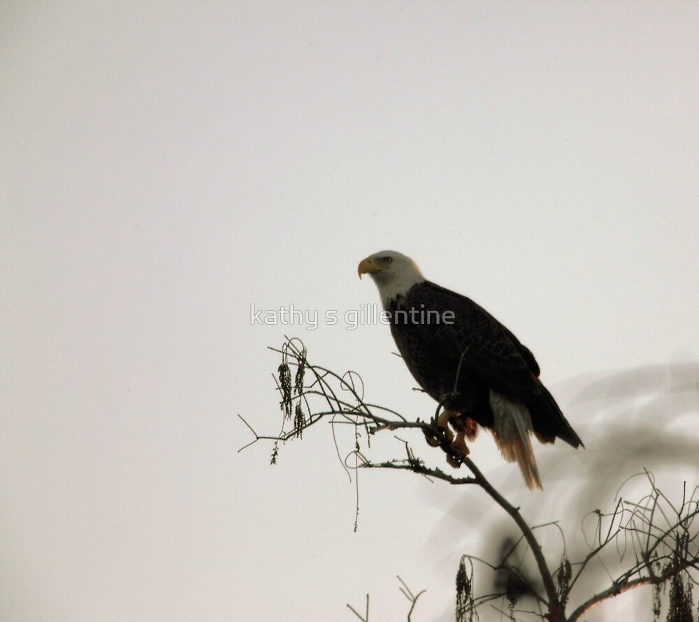 watchful eyes by kathy s gillentine