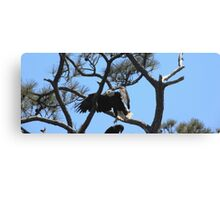 branch hopping Canvas Print