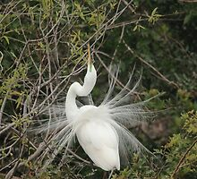 showing off by kathy s gillentine
