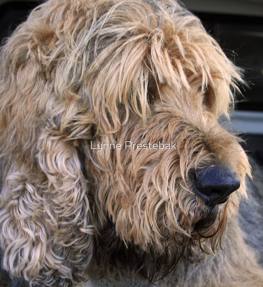 ..an otterhound.. by Lynne Prestebak