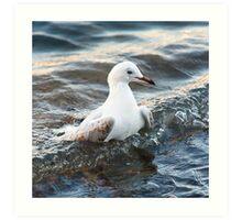 Surfing seagull Art Print