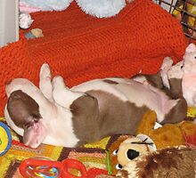 Bosco - Asleep With His Toys by Ginny York