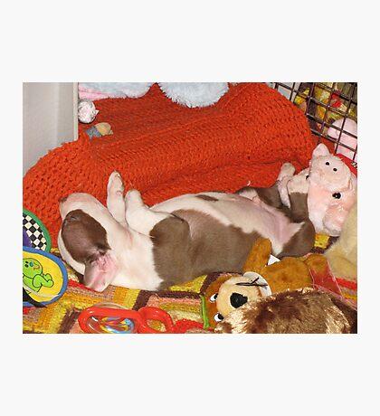 Bosco - Asleep With His Toys Photographic Print