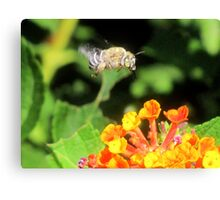 This Bee a Luck Shot! Canvas Print