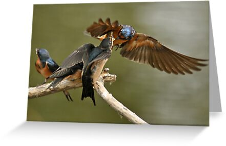 Feeding Swallows by Ken Haley