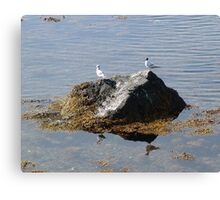 Gulls On A Rock Canvas Print