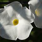 White Glory by Donna Adamski