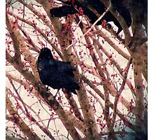 Crow in WInter  Photographic Print