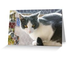 A Max And Mantle Bi Colour Cat Greeting Card