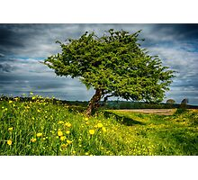 The One Tree, Port Meadow, Oxford Photographic Print