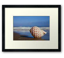 Seashell on the Seashore Framed Print